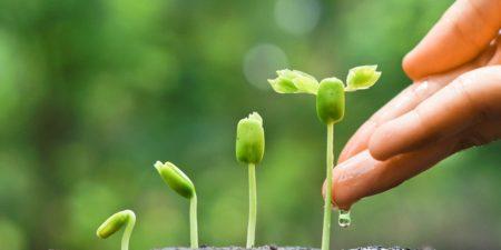 groende gröna växter