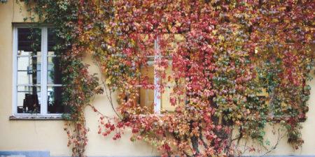 Gul vägg med gröna och röda löv.