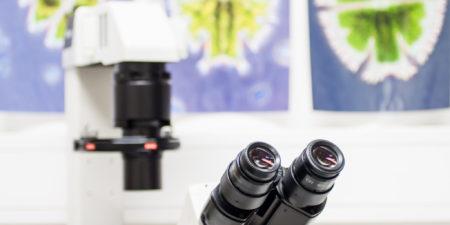 Mikroskop och celler.
