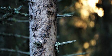Skogsbild_S_Westergård