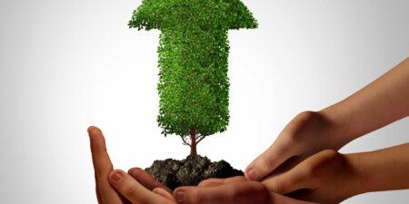 Händer som håller i ett pilformat träd. Bild för Tutorlärarutbildningen