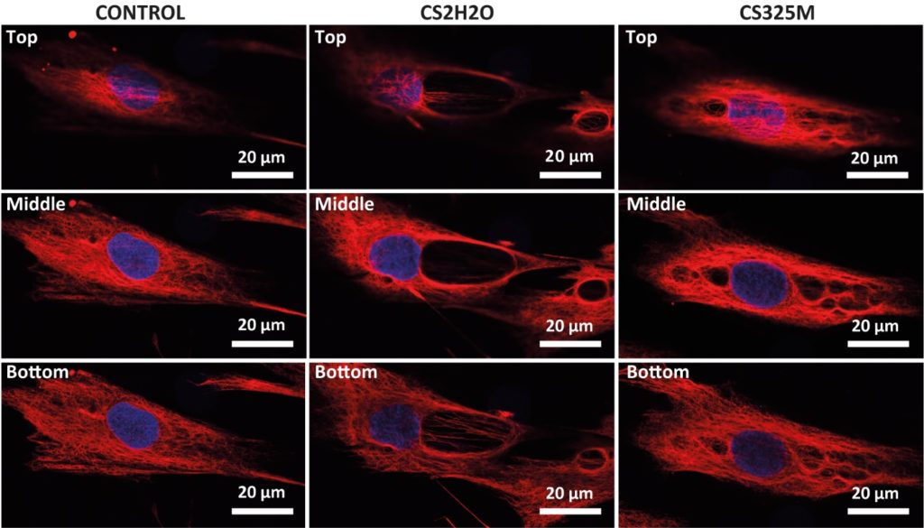 The figure shows the morphological changes (vimentin in red, nuclei in blue) induced on fibroblasts by two different kinds of calcium sulphates (CS2H2O, CS325M) capable of releasing calcium ions