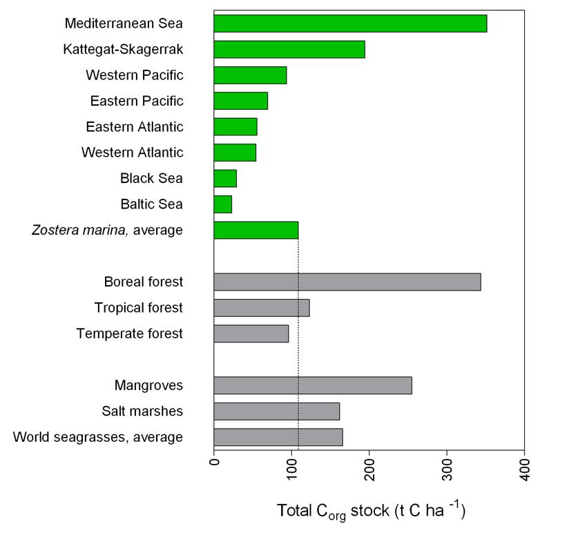 Graf över kolsänkor.