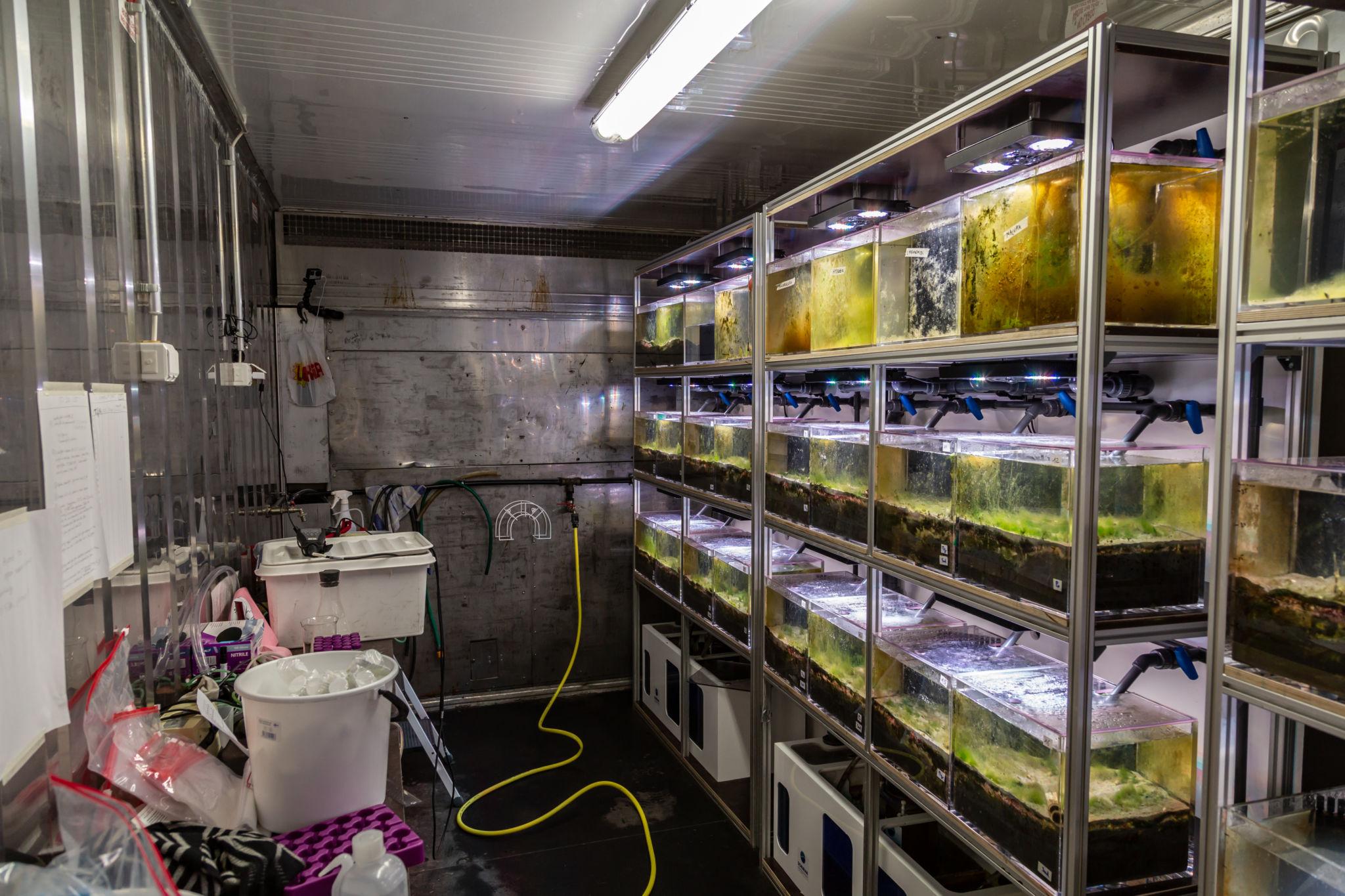 Insidan av Klimakontainern med akvarier på hyllor