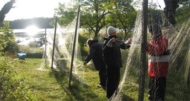 Genomgång av fiskfångst med nät på kursen ekologisk analys