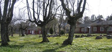 Husö biological station - buildings with a field of wood anemones and leafless trees in the foreground