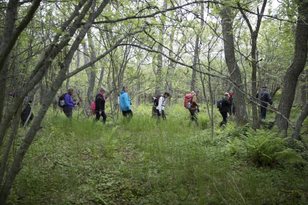 en rad med vandrare i en lummig och grön skog