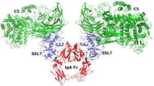 En datoriserad bild av proteinstrukturer.