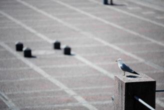 Fågel.