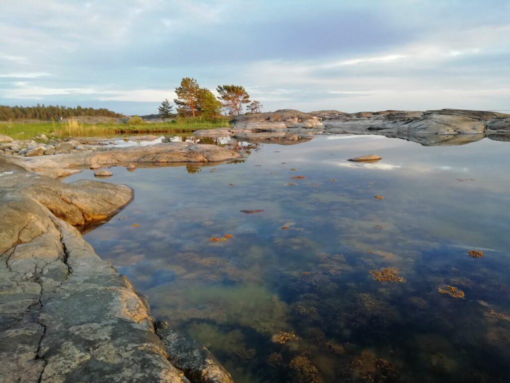 blåstång vid klippig strand