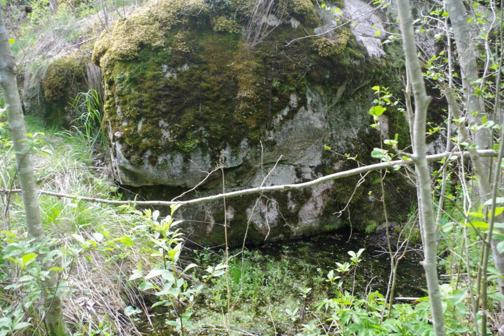 Silmälähde ses som en liten, rätt igenväxt pöl framför en sten med rikligt med växtlighet runtom.