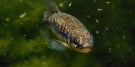 En fisk fotad under vattnet.