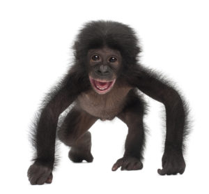 Picture of a monkey.