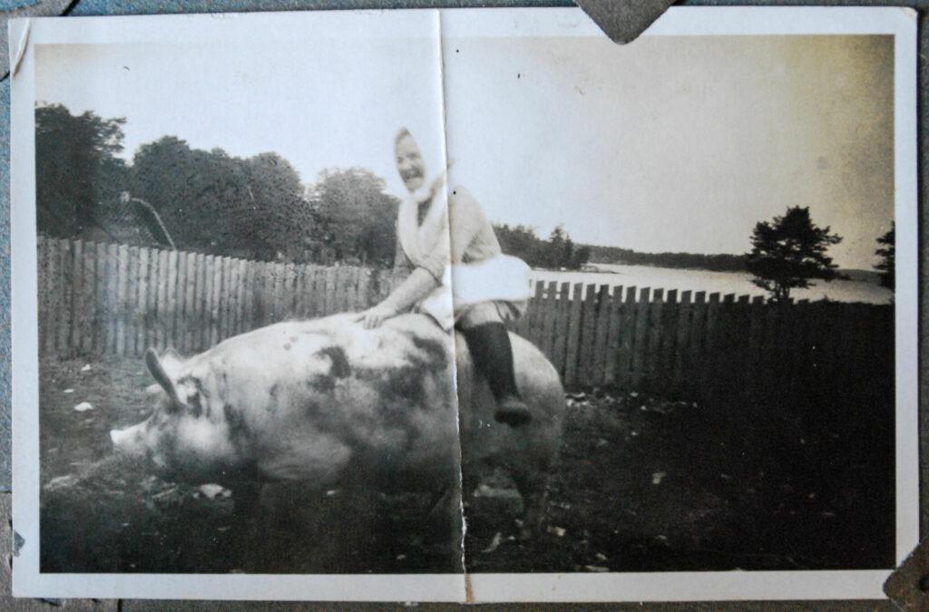 En svartvit gammal bild av en kvinna med hucke som rider på ett svin.