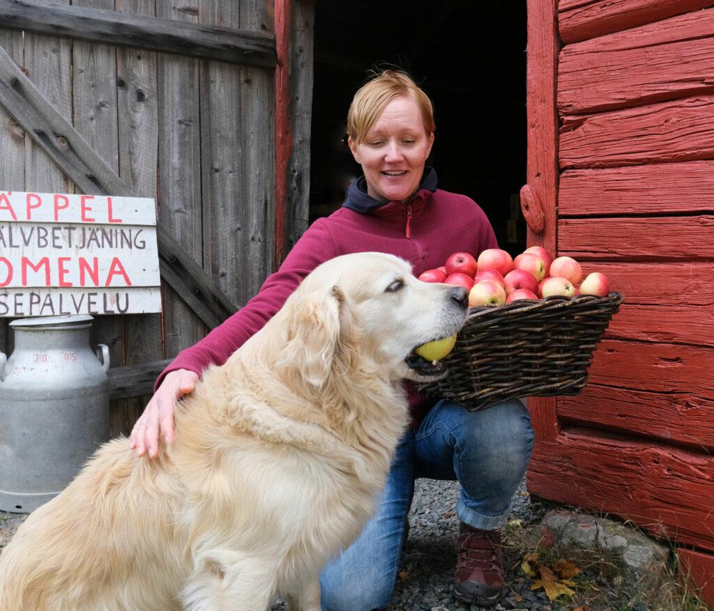 Annika Holmén med en korg äpplen i famnen. Bredvid henne golden retriver-hunden Willy med ett äpple i munnen.